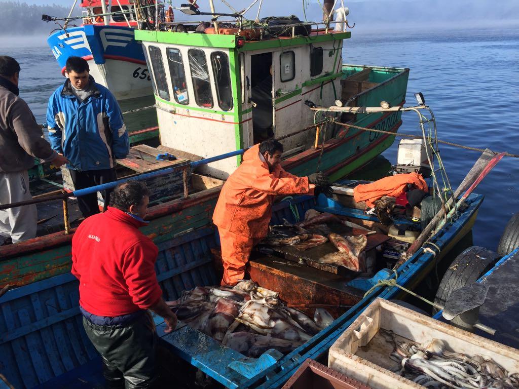 """Presidente de Fipasur Marco Ide:""""La Jibia es una pesquería que puede ..."""